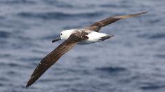 Какие птицы относятся к морским