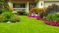 Как ухаживать за газоном весной, чтобы он радовал весь сезон