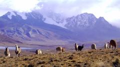 10 лучших боливийских фильмов