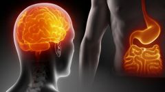 Как желудок влияет на работу мозга