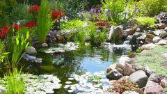 Лучшие декоративные растения для украшения кромки пруда