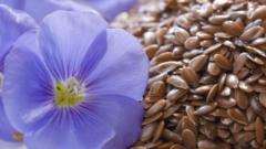Как использовать льняное семя для красоты кожи и волос