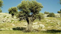 Почему столица Греции называется Афины, а не Посейдония?