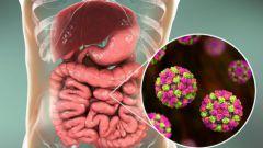 Как защитить слизистую кишечника от проникновения коронавируса?