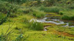 Как образуются болота
