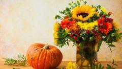 Топ-7 цветов для осеннего сада