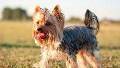 5 пород собак для квартиры