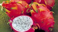 Питайя - самый красивый фрукт в мире: как использовать его в повседневной кулинарии
