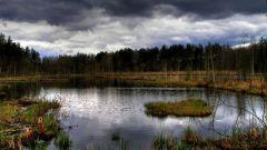 Загадочные места России: Череповецкие болота
