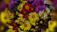 Поздние цветы: целительные свойства красоты