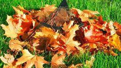 Экологичные способы уборки листьев во дворе