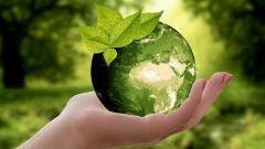 12 простых способов стать экологичнее
