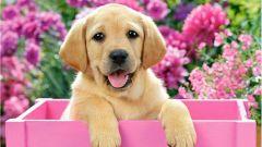 Как правильно выбрать собаку для себя и в подарок