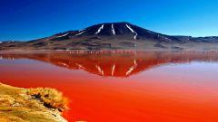 Натрон: озеро превращающее все живое в камень