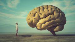 9 мифов о человеческом мозге