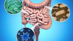 Как защитить кишечник и печень от COVID-19: рекомендации врачей