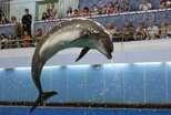 Красивые дельфинята