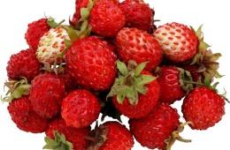 Земляника – вкусная и полезная ягода из детства