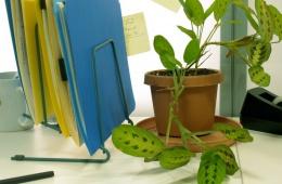 Растение для офиса