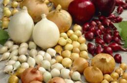 Лук-севок - урожай на славу