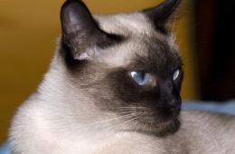 Стильные кошки для любящих хозяев
