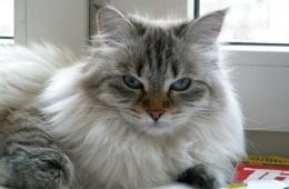 Кот с характером