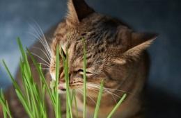 Кот стал пастись прямо на подоконнике