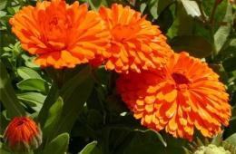 Такой чудесный оранжевый цветок