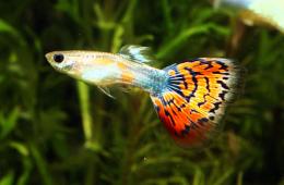 Рыбки для начинающих