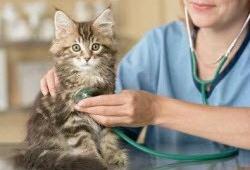 «Беланта» - оперативная помощь животным