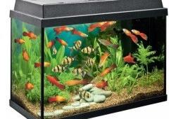 Идеальный вариант для начинающих аквариумистов