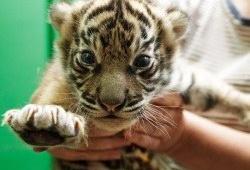Впечатляющий пражский зоопарк ZOO PRAHA