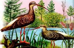Задушевные рассказы о природе