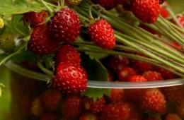 Ароматная, полезная ягода