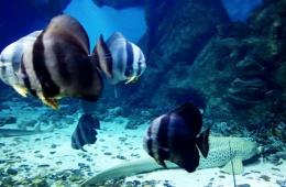 Маленький приятный московский океанариум в ТЦ «Рио»