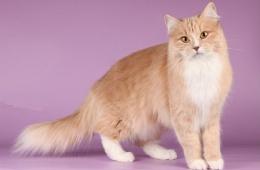 Мягкие лапки - удаление когтей у кошек: безопасно, если квалифицированный врач