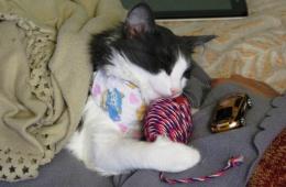 Кошка после наркоза: что нужно знать, чтобы все было хорошо