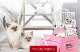 Набор для котенка в подарок