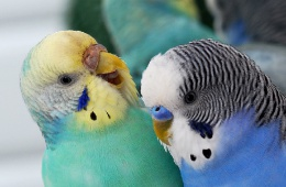 10 лет вместе с попугаями