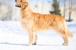 Самая лучшая собака для семьи