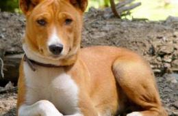 Красивая и умная собака.