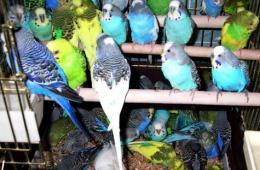 Чудесные птички