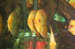 Красота подводного мира в алуштинском аквариуме