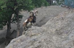 Прогулка по зоопарку в Алуште