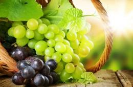 Чудесные свойства виноградного масла