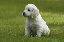 Собака может быть лучшим другом хозяина