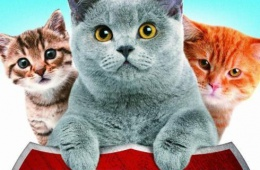 """Documentary series """"Cats can not love"""""""