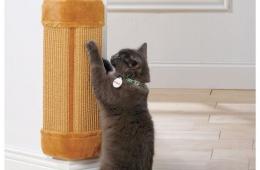 Когтеточка «Три кота» помогает нам сберечь мебель и обои от нашей киски