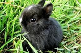 Мини-кролик для дома и семьи