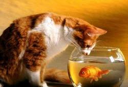 Отпуск с золотой рыбкой